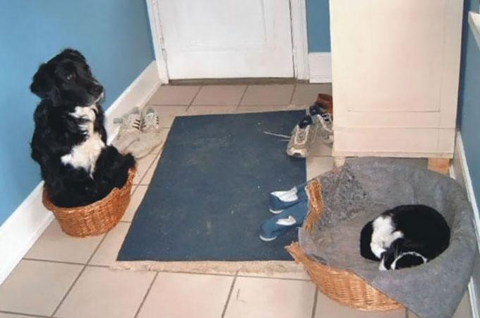 犬が猫にベッドを盗まれると言ういたたましい事件が再び起きる