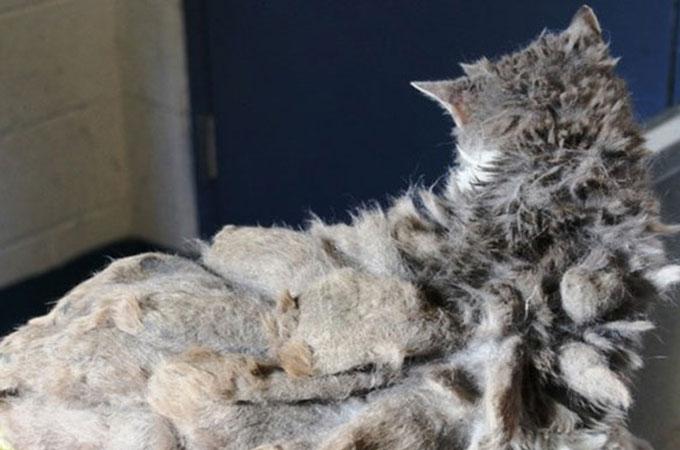 猫と判別がつかないほどひどい状態で発見された老猫のスカーレット