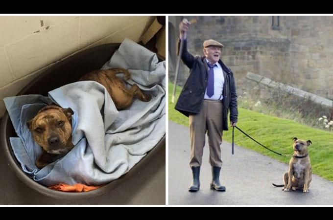 誰からも必要とされなかったシェルター犬がムービースターとして新しい人生を歩き出す