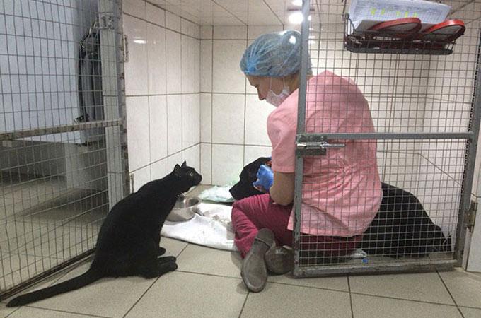 脊椎損傷で歩くことが出来なくなった猫が看護師になり多くの動物たちを救う