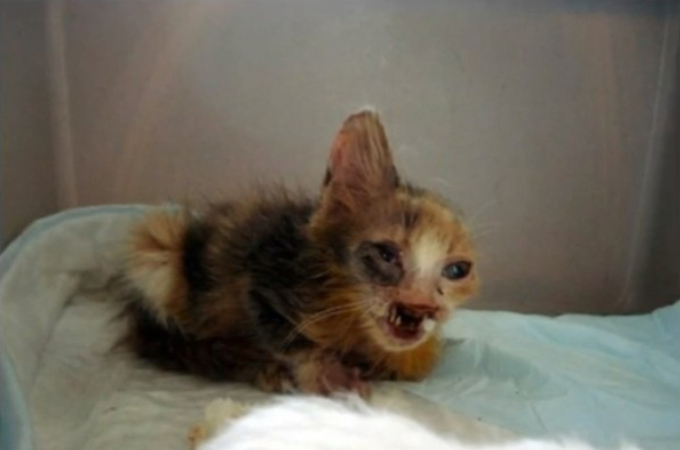 人通りの多い路地のゴミ箱にいた衰弱した子猫。7歳の女の子によって救われる