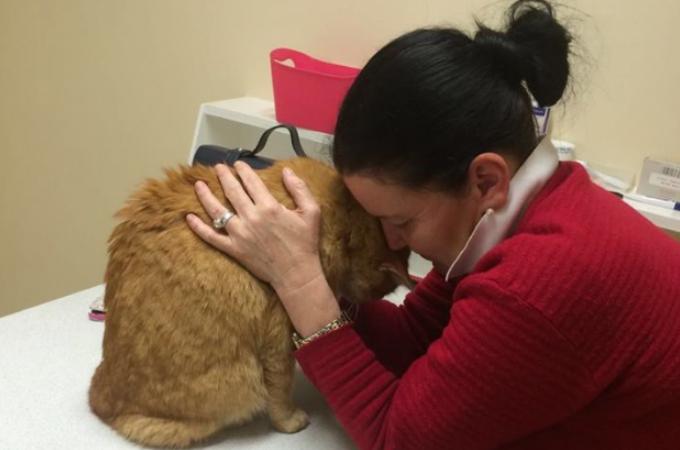 病気の治療で母国に帰った飼い主。愛猫を隣人に預けるも引っ越され迷い猫となってしまった猫。