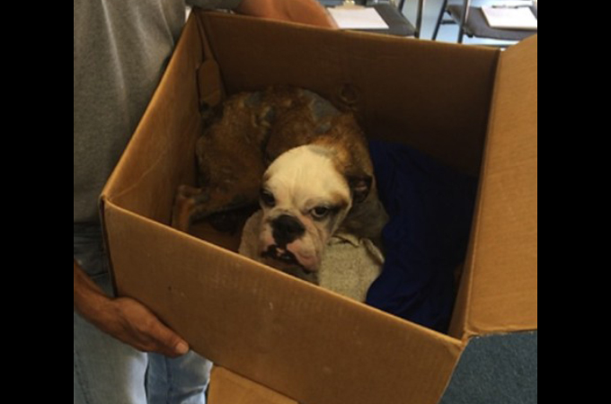 ダニが付いていたことが原因で捨てられてしまった犬。布切れと勘違いされるほど酷い状態からの生還