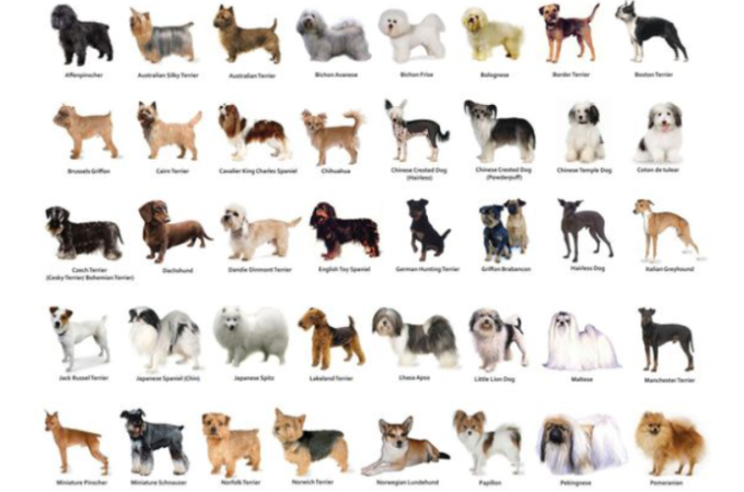 【診断】もしもあなたが犬だったとしたら何犬?