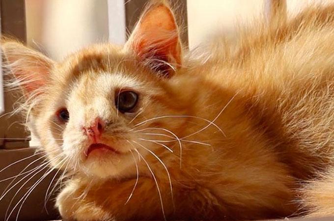 あまりにも醜いと引き取り手のいなかった猫が真の美しさを知る人と出会う