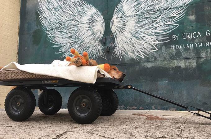 ガンを患い寝たきりの老犬 ワゴンでの毎日の散歩によって起こした奇跡とは
