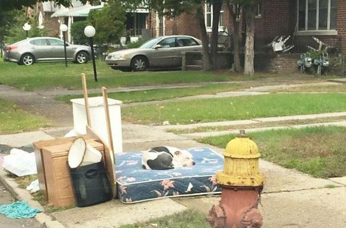 引っ越しでいらなくなった家具と一緒に捨てられた犬が飼い主の帰りを待ち続ける