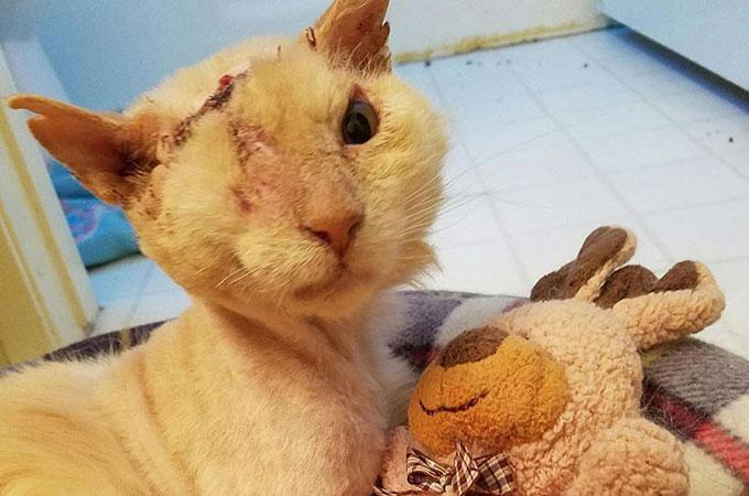 虐待で頭から酸をかけられ片目を失った猫 それでも人間を信頼し続ける