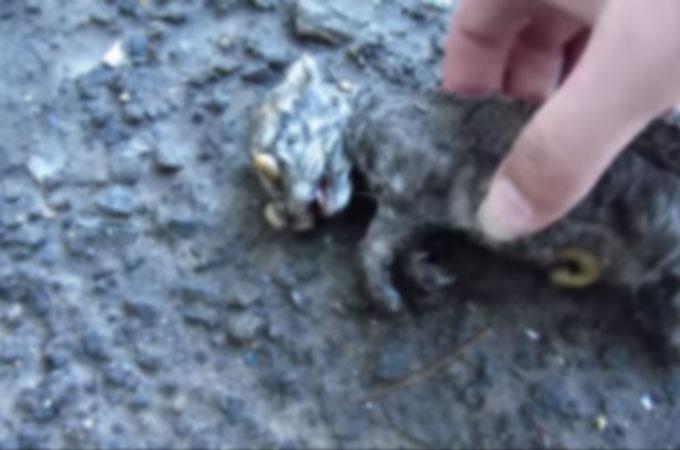 嵐が過ぎ、ナメクジに覆われ泥だらけの地面に横たわる子猫が見つかる