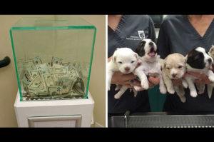 見返りなど求めることなく、動物保護施設へ匿名で80万円が寄付される