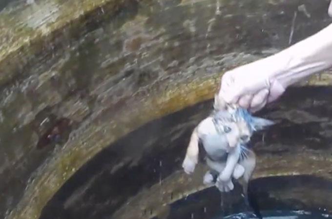 空のタンクが突然の大雨でいっぱいに!中にいた子猫が溺死の危機にさらされる