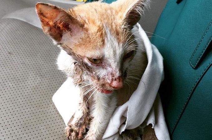 全身傷だらけで血と膿のかたまり状態で高速道路の端に倒れていた子猫