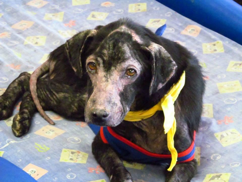 原因不明の皮膚病に苦しめられていた1匹の犬。安楽死の予定もあったその皮膚病の原因とは