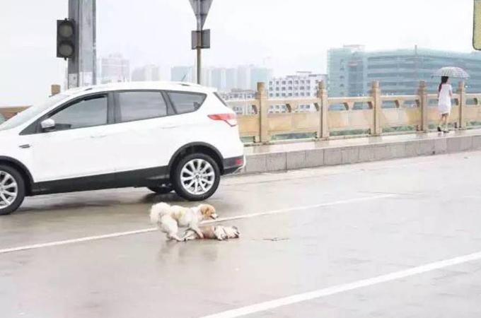 事故に遭ってしまった犬に寄り添うもう1匹の犬。周りの人間の、目を疑うような冷たい反応