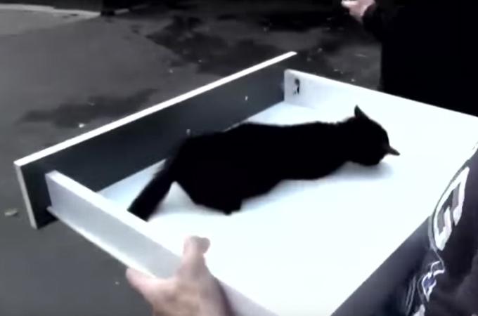 瀕死の状態の子猫を発見した男性。机の引き出しを担架の代わりにし、安全に獣医の元へと運び無事生還