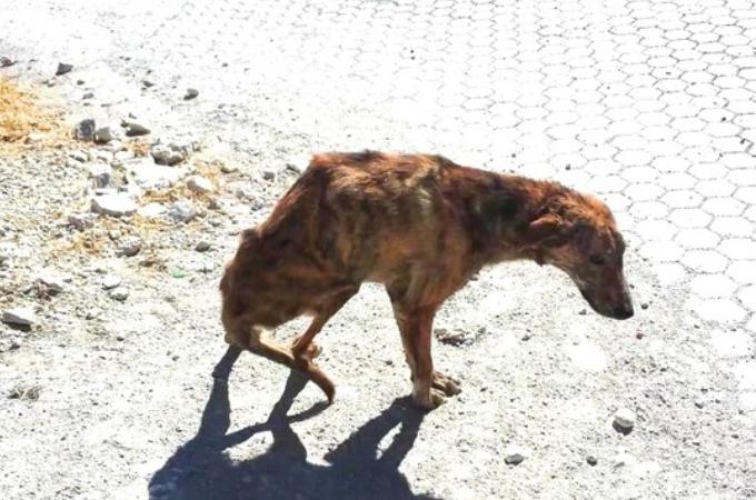 長くに渡り虐待をされ背骨が折られていた野良犬。旅行中の女性と出会い運命を変える