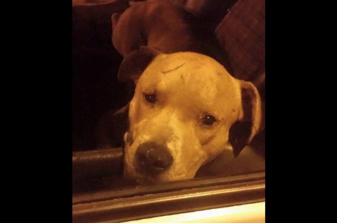 虐待を受け車内に放置された犬を助けたのはネット。動いてくれなかった警察を動かすことに