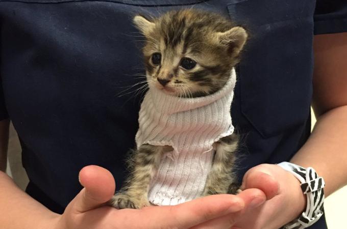 多くの被害を出した大型ハリケーンから救い出された子猫。保護された姿が可愛いと注目を集める