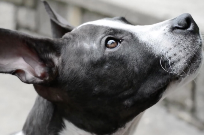 怪我を負った状態で発見された子犬。その状態に保護スタッフは怒りに震える。