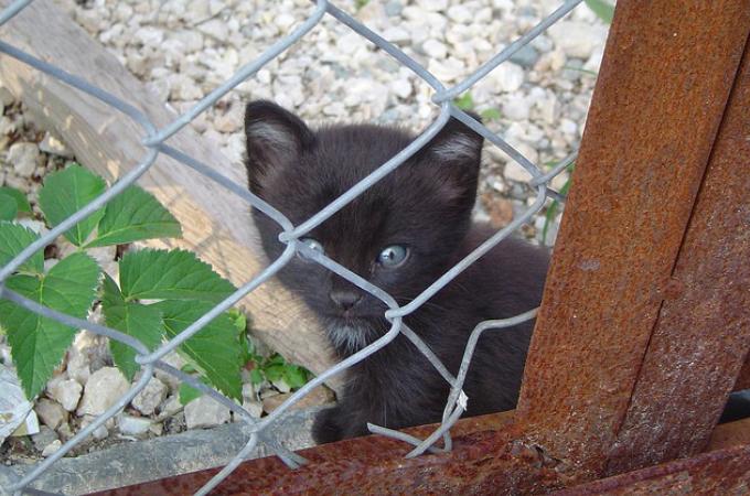 旅行中の夫婦が野良犬3匹に襲われている子猫を保護。子猫に夢中になった夫婦は旅行の日程を全てキャンセル