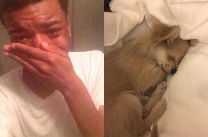 「犬は寝ている時どんな夢を見ているか」という大学教授の研究結果を見た愛犬家たちが号泣