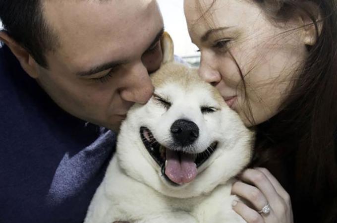 素敵な笑顔を振りまく柴犬。大きな病気を抱えているも、飼い主の前向きな思いに答える