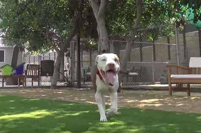 保護団体によって保護され笑顔を取り戻した、優しい目をした野良犬