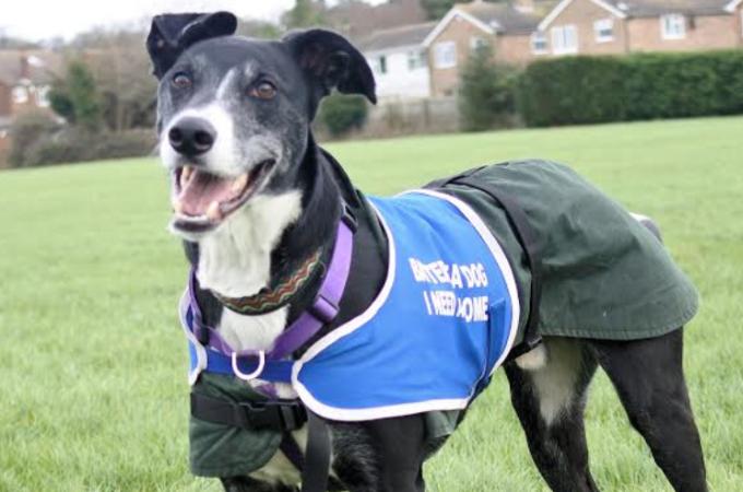 1000日以上も里親が見つからず、他の犬たちが里親と施設を去っていくのを見てきた犬がついに家族と巡り会う