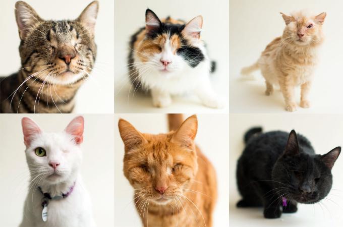盲目や片目の猫たちを撮影する写真家。撮影された写真に写し出されたのは「命の美しさ」