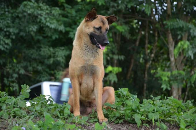 飼い主に捨てられた道路で1年間も迎えを待ち続けた犬に訪れた悲しい最期