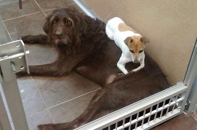 飼い主の赤ちゃんがアレルギーと言う理由から捨てられた2匹の犬の絆