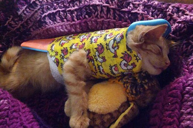 車にはねられ道路の側に倒れて死んだと思われた1匹の子猫が奇跡の生還