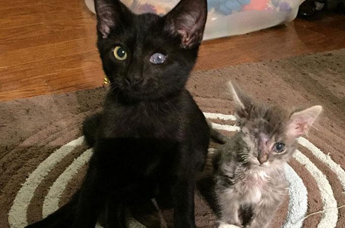 左目が見えない猫と右目を失った猫 お互いの目となり支え合う姿に胸が熱くなる