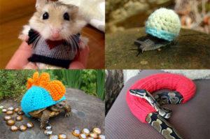 愛情こもった素敵なセーターを着て満足げなかわいい動物たちの画像15選