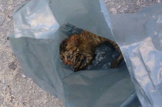 固く結ばれたビニール袋に入れられた子猫。発見した女性の家族となり幸せに過ごす