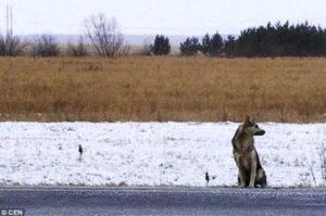 氷点下の中、交通事故で亡くした飼い主を待ち続ける犬に胸が熱くなる