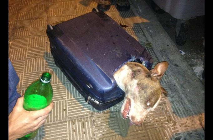 スーツケースに入れられゴミ捨て場に捨てられた犬。残虐な事件として警察が捜査をし、明らかとなった事とは
