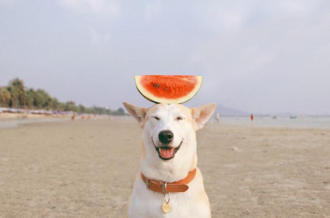 子宮炎、子宮頸がんを患い飼い主と共に乗り越えた元野良犬の笑顔