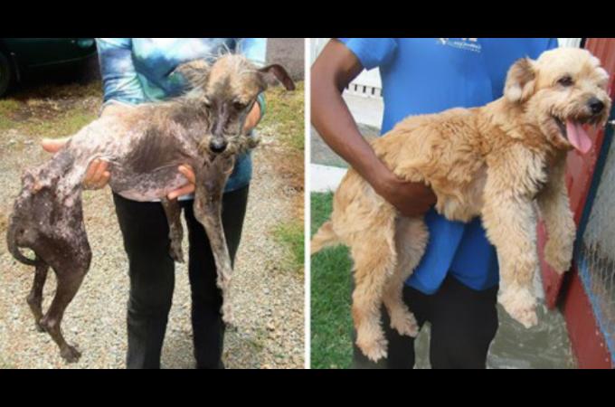 辛い生活から保護され見違えるように変化し、安心と笑顔を取り戻した犬たちのBEFORE・AFTER