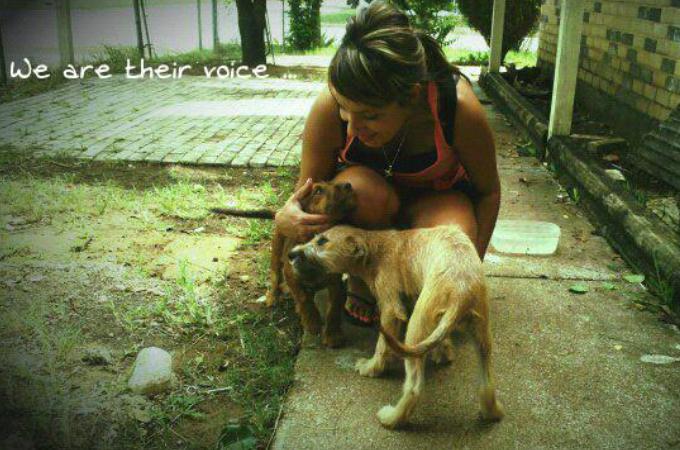 「犬捨て公園」と呼ばれている公園に捨てられた犬たちを救う活動をする女性
