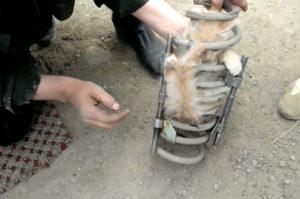 トラックのスプリングに挟まったまま50マイルもの間走り続けた猫が救出されるまで
