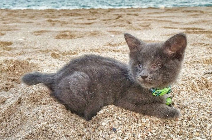 心臓病を患い余命わずかの子猫の一生が素敵なものになるよう立てられた計画