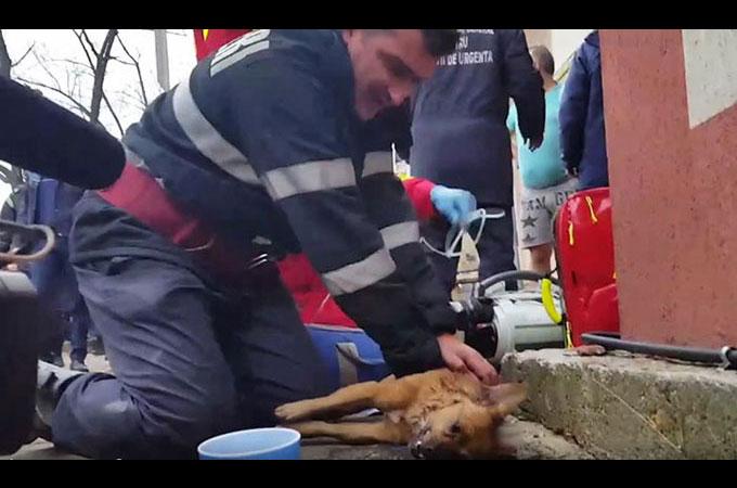 住宅火災によって息はなく歩道に横たわる犬の人生のために戦う消防士