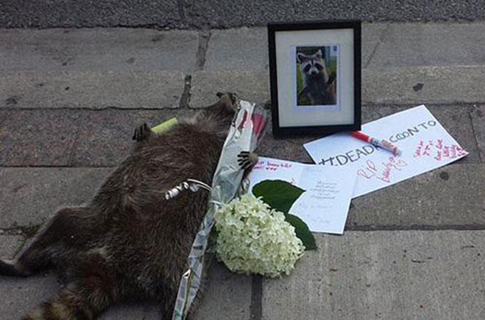 歩道で死んでいたアライグマのため多くの人が悲しみキャンドルに火を灯し続ける