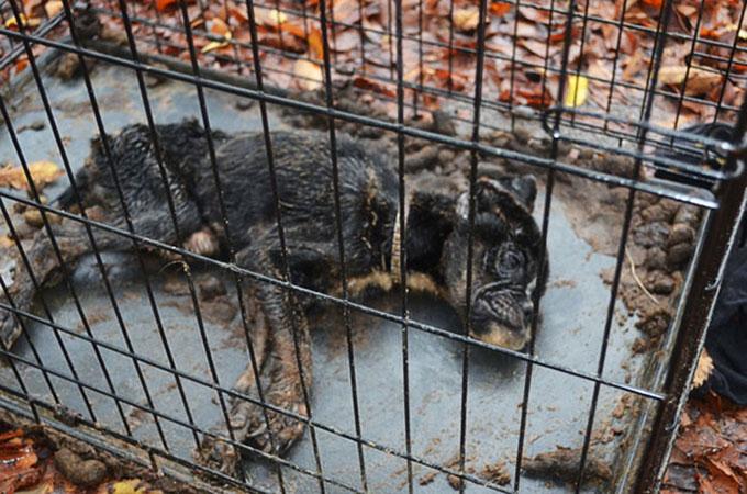 誰もが助からないと思った瀕死の犬に再び生きるチャンスをくれた1人の獣医師