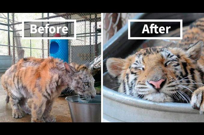 動物たちを救い人間と動物の信頼関係を回復した2016年に話題となった出来事まとめ