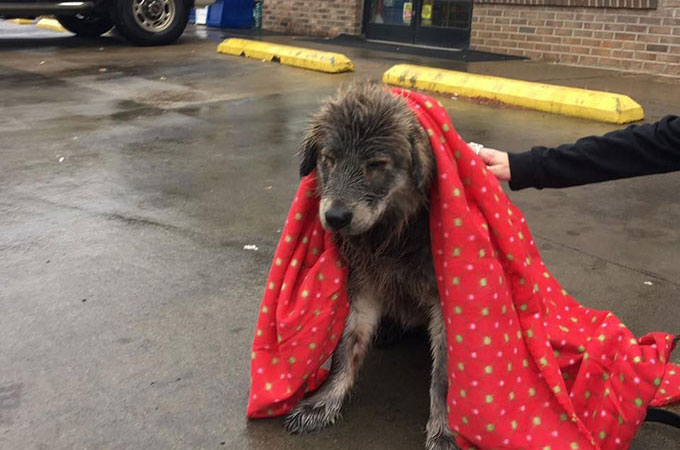 冷たい雨の中、生きることをあきらめたかのような1匹の野良犬が見つかる