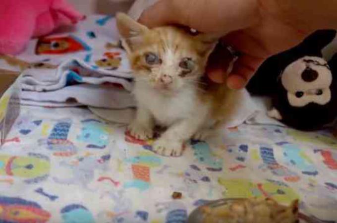 生きている事が不思議と言われるほどの瀕死の状態で保護された子猫。医師の懸命なケアによって少しずつ回復する