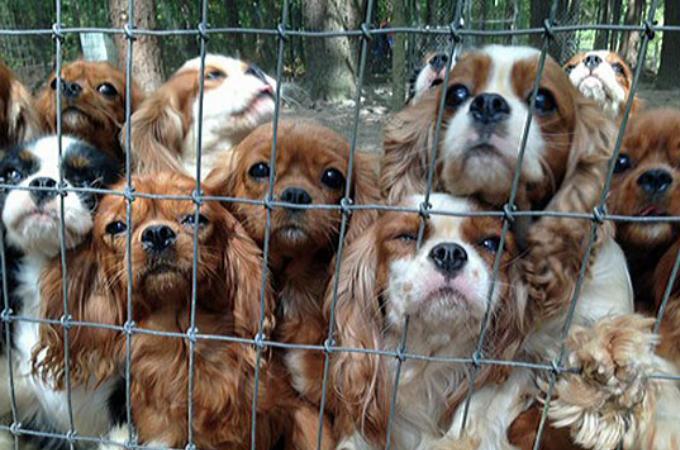 悪徳ブリーダーから救われた108匹の犬たち。救出現場となったオークション会場で飛び交う信じられない言葉とは