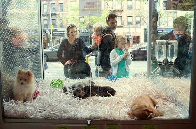 ペット業界に激震!買われる動物たちを保護する法律が成立!